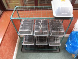 Seed trays in the sun room